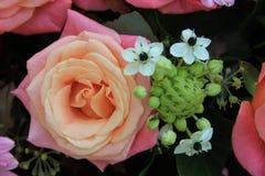 Rosa brud- blommor Fotografering för Bildbyråer