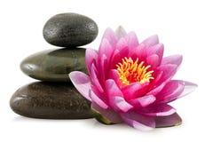 rosa brunnsortstenar för lotusblomma Fotografering för Bildbyråer