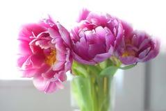 Rosa bukett Royaltyfri Fotografi