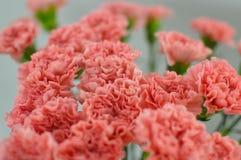 Rosa bukett av blommor från nejlikor royaltyfria foton
