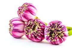 Rosa bukett för lotusblommablommor som isoleras på vit bakgrund Royaltyfria Bilder