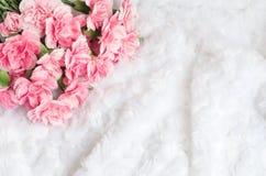 Rosa canation Blumen-Hintergrund mit Platz für Text Lizenzfreies Stockfoto