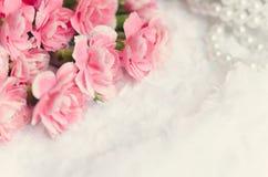 Rosa canation Blumen-Hintergrund mit Platz für Text Lizenzfreie Stockbilder