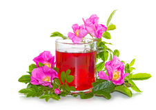Rosa canina flowers with a herbal infusion. Vibrant pink Rosa canina flowers, or dog rose, with a red herbal infusion or tea in a clear glass mug prepared from Stock Photos