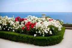 Rosa cespugli sopra la vista del mare Fotografie Stock