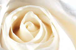 Rosa Champagne Royalty Free Stock Photos