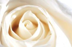 Rosa Champagne Royalty-vrije Stock Foto's
