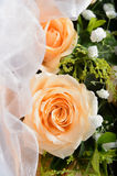 Rosa Champagne Stock Images