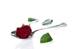 Rosa che si trova in un cucchiaio. Fotografie Stock Libere da Diritti