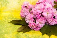 Rosa Cherry Blossoms Stockfotos