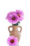 Rosa Chrysantheme Lizenzfreies Stockfoto