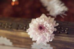 Rosa Chrysanthemenblume auf Kasten stockfotografie
