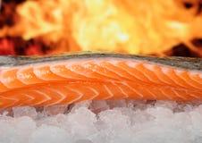 Rosa coloriu os peixes, alimento do verão com marinade do vinho Fotografia de Stock