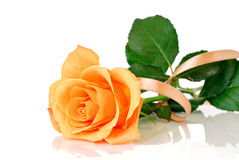 Rosa com fita Foto de Stock Royalty Free