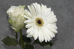 Rosa com gerber Imagem de Stock Royalty Free