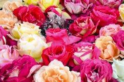 Rosa com pouca fonte Imagem de Stock