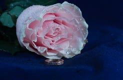 Rosa com um anel de diamante em um veludo azul imagem de stock