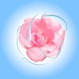 Rosa con acqua Fotografia Stock Libera da Diritti