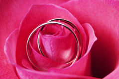 Rosa con due anelli di cerimonia nuziale Fotografie Stock Libere da Diritti