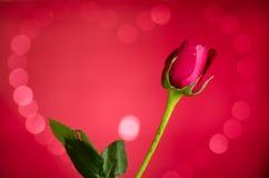 Rosa con il bokeh del cuore Fotografia Stock Libera da Diritti