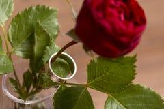 Rosa con il matrimonio o l'anello di fidanzamento Fotografie Stock Libere da Diritti