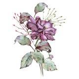 Rosa con le foglie in un mazzo Isolato su priorità bassa bianca Fotografie Stock Libere da Diritti