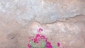 Rosa con terra immagine stock