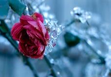 Rosa congelata Fotografia Stock Libera da Diritti