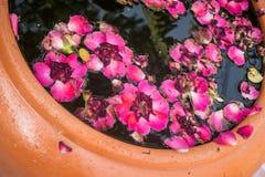 Rosa cor-de-rosa no frasco de cerâmica imagens de stock