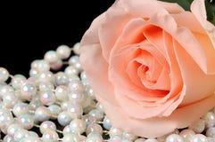 Rosa cor-de-rosa foto de stock royalty free