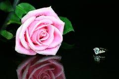 Rosa cor-de-rosa com anel de diamante Fotografia de Stock