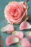 Rosa cor-de-rosa com pétalas imagem de stock royalty free