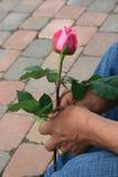 Rosa cor-de-rosa do amor Imagens de Stock Royalty Free