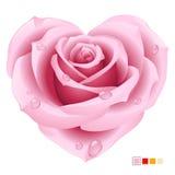 Rosa cor-de-rosa na forma do coração Fotografia de Stock Royalty Free