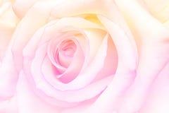 Rosa d'annata romantica con l'estratto ha offuscato il fondo del fiore Fotografie Stock