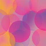 Rosa da cor Foto de Stock Royalty Free