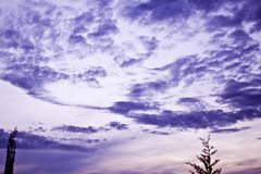 Rosa da cor pastel e céu roxo no por do sol fotografia de stock