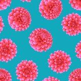 Rosa dahlia på blå bakgrund Nationell blomma för Mexico ` s också vektor för coreldrawillustration vektor illustrationer