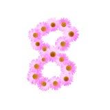 Rosa Daisy Number Eight Royaltyfria Bilder