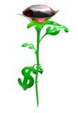 Rosa das folhas no dólar do formulário Foto de Stock