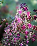 Rosa de la flor Imagen de archivo libre de regalías