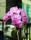 Rosa de la orquídea en un árbol foto de archivo libre de regalías