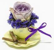 Rosa de la púrpura en una taza de té Fotografía de archivo libre de regalías