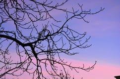 Rosa de la puesta del sol de la opinión del cielo Imágenes de archivo libres de regalías