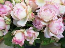 Rosa de rosas Fotografia de Stock Royalty Free