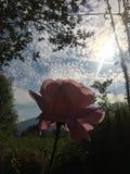 Rosa de Rose en el cielo imágenes de archivo libres de regalías