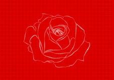 Rosa dei crani Fotografia Stock