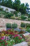 Rosa dekorativa blommor i parkera av sanatoriet Royaltyfria Bilder