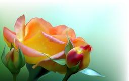 Rosa del amarillo Fotografía de archivo