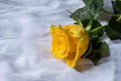 Rosa del amarillo con el fondo de la tela de los descensos del agua Imágenes de archivo libres de regalías